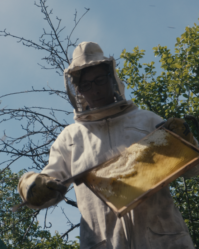bees_2.15.1_1.png