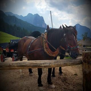 Pferdekutsche zur Tuffalm