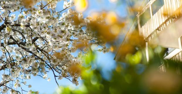 Sonnleiten Dolomiten Residence Frühling